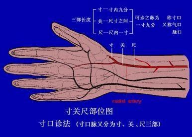 【读经典学中医】《难经》白话解:第三难,中医把脉诊断病脉和死脉