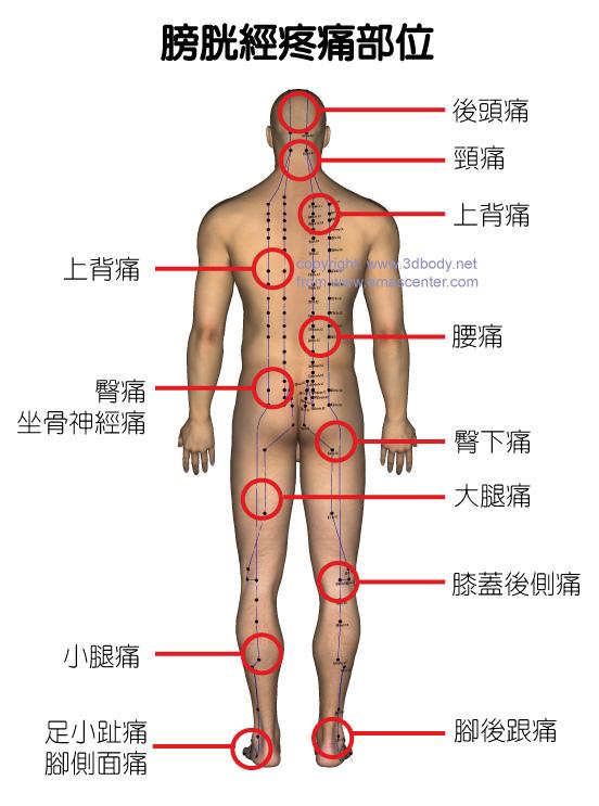 身体常见的疼痛及相关经络穴位分部图